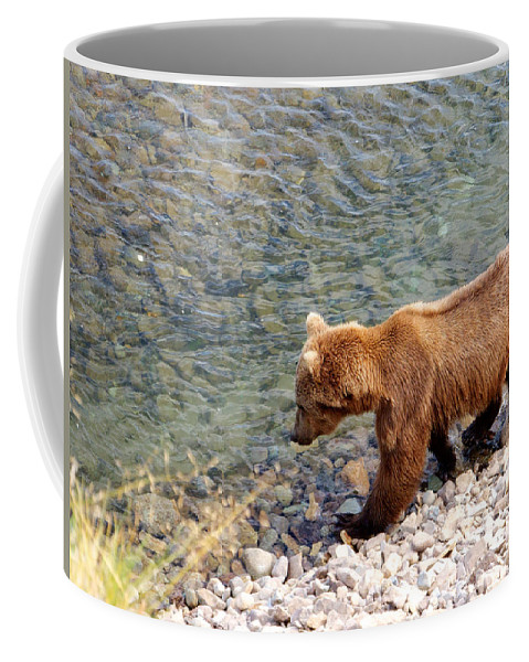 Cinnamon-colored Grizzly Bear In Moraine River Coffee Mug featuring the photograph Cinnamon-colored Grizzly Bear By Moraine River In Katmai Np-ak by Ruth Hager