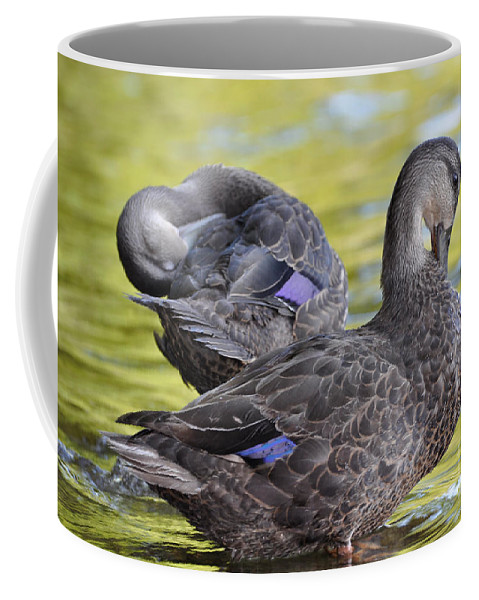 Ducks Coffee Mug featuring the photograph Ducks on Green by Glenn Gordon
