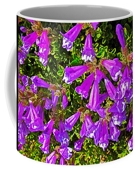 Cliff Penstemon On Watchman Overlook At Crater Lake National Park Coffee Mug featuring the photograph Cliff Penstemon On Watchman Overlook In Crater Lake National Park-oregon by Ruth Hager