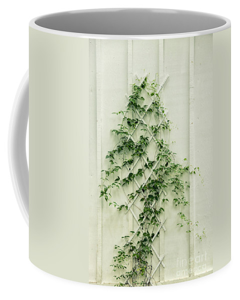 Ivy Coffee Mug featuring the photograph Climbing by Margie Hurwich