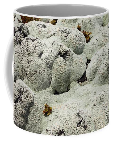 Algae Coffee Mug featuring the photograph Close Up Of Lichens Commonly Called Rock Moss by Stephan Pietzko