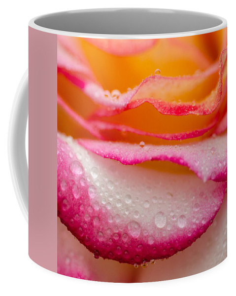 Roses Coffee Mug featuring the photograph Close Up Of Pink Rose Petails Covered Dew by TouTouke A Y