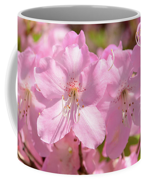 Day Coffee Mug featuring the photograph Close Up Of Pink Shell Azalea Flowers by Darlyne A. Murawski