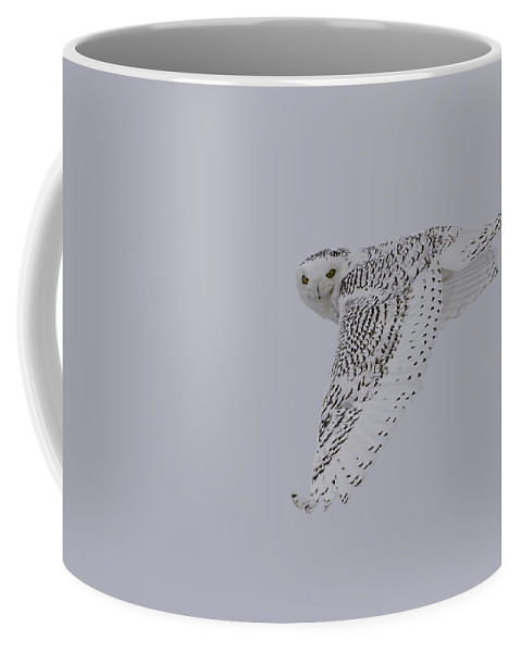 Snowy Owl (bubo Scandiacus) Coffee Mug featuring the photograph Close Up Of The Ghost Flight by Thomas Young