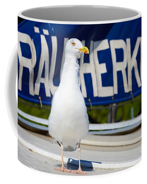 Closeup Coffee Mug featuring the photograph Closeup Of A Seagull On A Fisher Boat by Nick Biemans