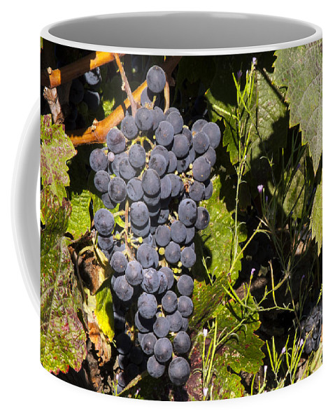 Napa Valley California Wineries Winery Cluster Clusters Grape Grapes Grapevine Grapevines Vine Vines Leaf Leaves Food Vineyard Vineyards Coffee Mug featuring the photograph Clustered by Bob Phillips