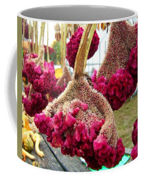 Autumn Coffee Mug featuring the photograph Cockscomb by Elaine Duras