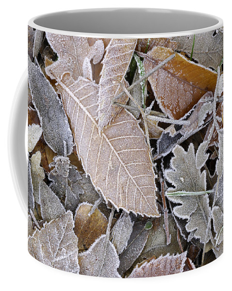 Coffee Mug featuring the photograph Cold Leaves by Guido Montanes Castillo