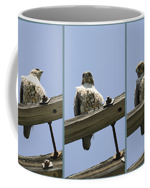 Hawk Coffee Mug featuring the photograph Cold Stare by Luke Moore