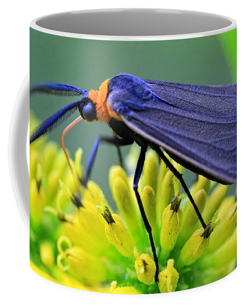 Bugs Coffee Mug featuring the photograph Color Me Blue by Geoff Crego