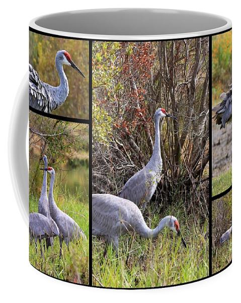 Sandhill Crane Coffee Mug featuring the photograph Colorful Sandhill Crane Collage by Carol Groenen