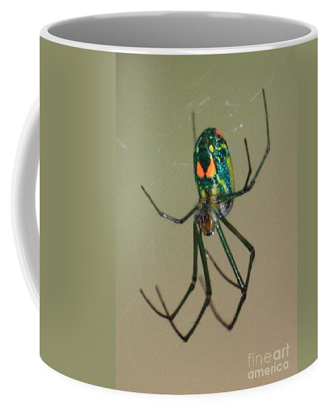 Spider Coffee Mug featuring the photograph Colorful Spider In The Swamp by Carol Groenen