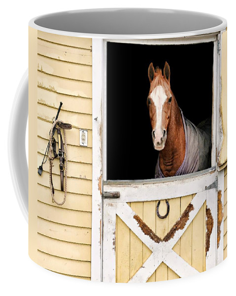 Horse Coffee Mug featuring the photograph Colt by Diana Angstadt