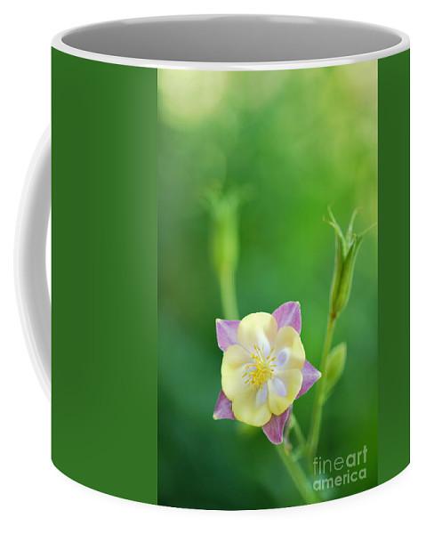 Columbine Coffee Mug featuring the photograph Columbine by Grigorios Moraitis