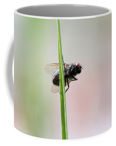 Fly Coffee Mug featuring the photograph Come Fly With Me by Doris Potter