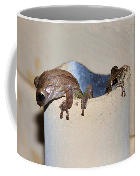 Cuban Frogs Coffee Mug featuring the photograph Come Out Come Out by Davids Digits