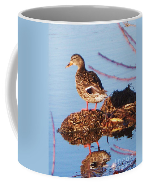 Comedian Coffee Mug featuring the photograph Comedian Duck by Eric Schiabor