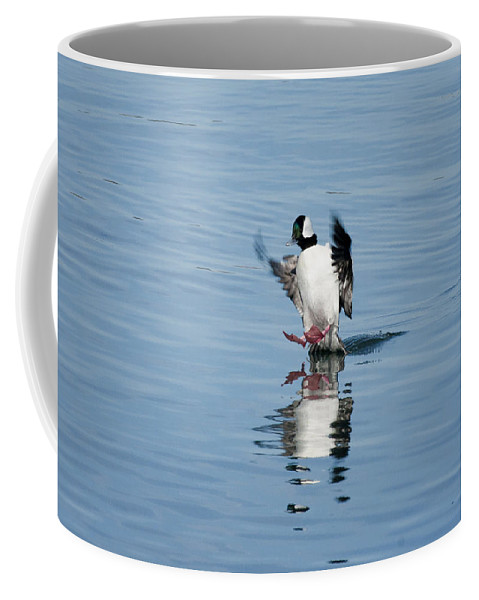Bufflehead Coffee Mug featuring the photograph Coming In On A Tail And A Prayer by Betty Depee