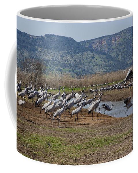 Migratory Coffee Mug featuring the photograph Common Crane Grus Grus by Eyal Bartov