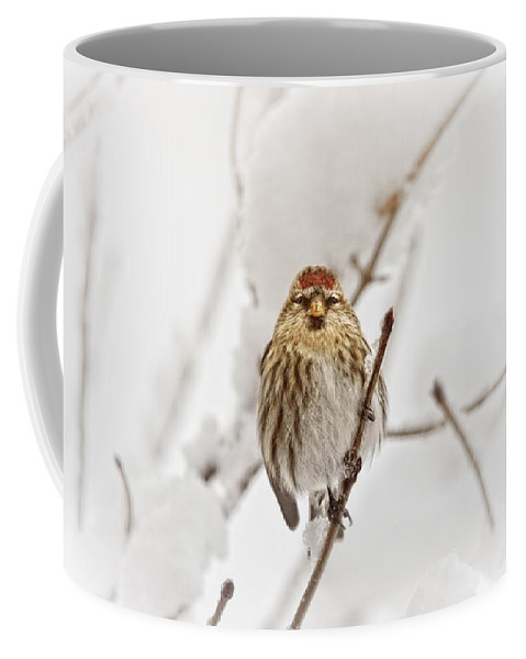 Birds Coffee Mug featuring the photograph Common Redpoll by Susan Capuano
