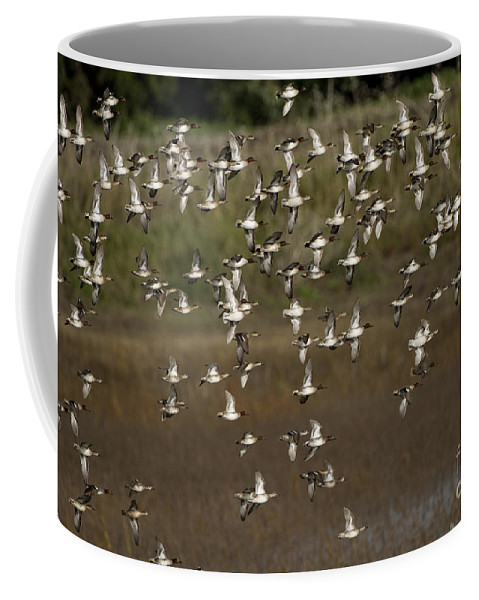 Common Teal Coffee Mug featuring the photograph Common Teal Anas Crecca 1 by Eyal Bartov