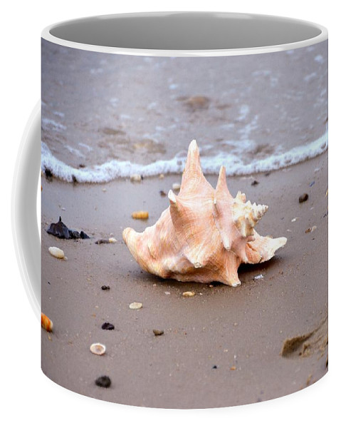 By Coffee Mug featuring the photograph Conch by Bill Cannon