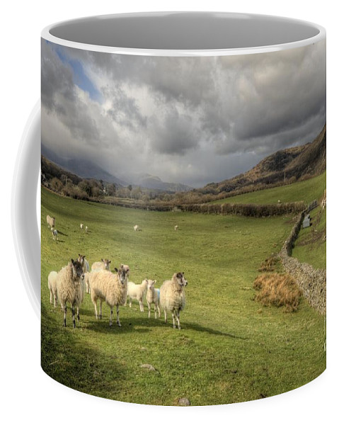 Lake Coffee Mug featuring the photograph Coniston Sheep by Rob Hawkins