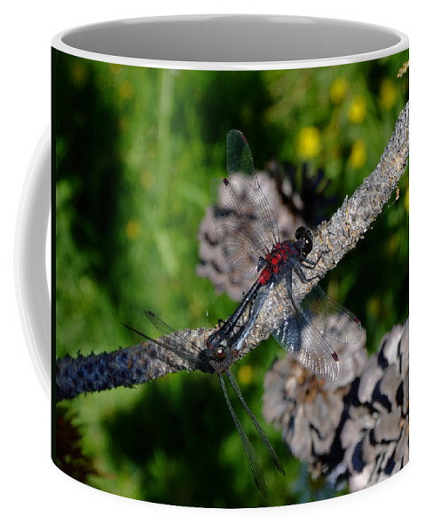 Dragonfly Coffee Mug featuring the photograph Consumate Romantic by Donna Blackhall