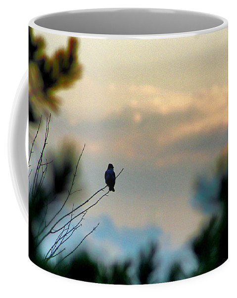 Bird Coffee Mug featuring the photograph Contemplation by Bruce Patrick Smith