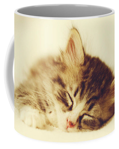 Kitten Coffee Mug featuring the photograph Content Kitty by Pam Holdsworth