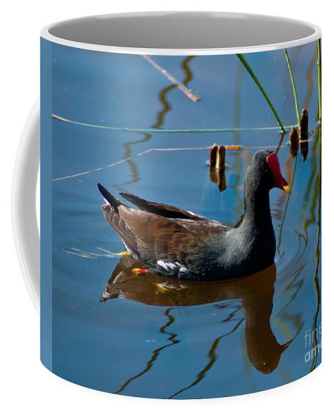 Florida Bird Coffee Mug featuring the photograph Coot by Stephen Whalen