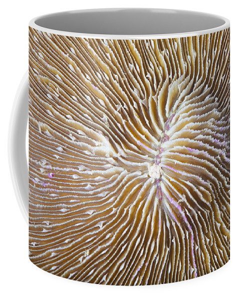 Animal Coffee Mug featuring the photograph Coral Closeup by Anthony Totah