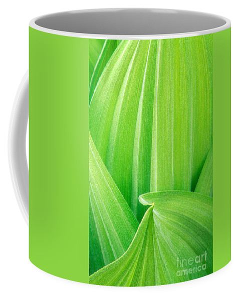 North America Coffee Mug featuring the photograph Corn Lily Leaf Detail Yosemite Np California by Dave Welling