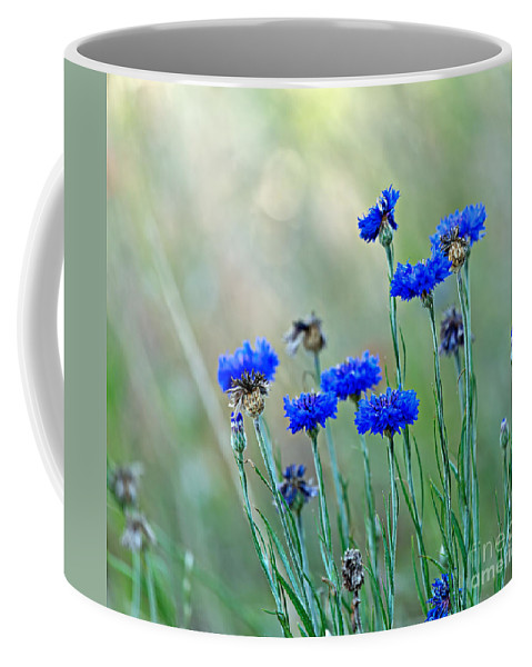 Cornflower Coffee Mug featuring the photograph Cornflowers by Louise Heusinkveld