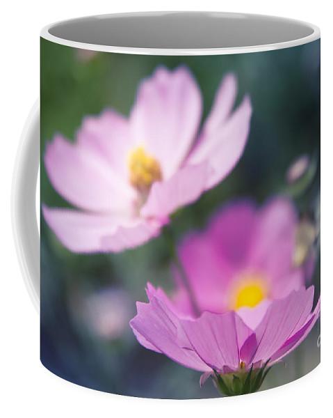 Cosmos Coffee Mug featuring the photograph Cosmos Sensation - Fiori Rosa by Sharon Mau