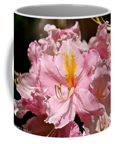 Flower Coffee Mug featuring the photograph Cotton Candy Azalea by Susan Herber