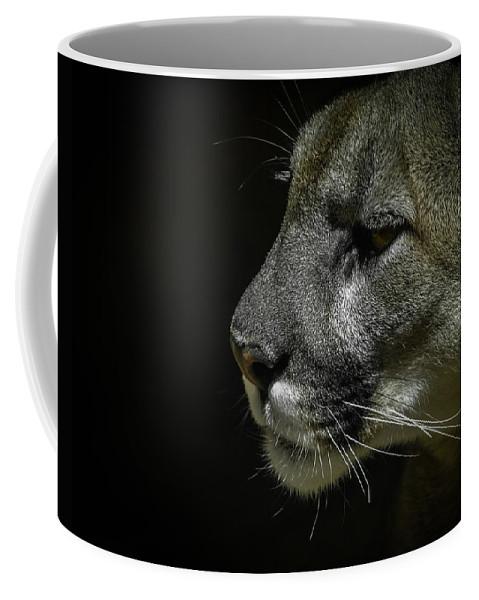 Mountain Lion Coffee Mug featuring the photograph Cougar by Ernie Echols