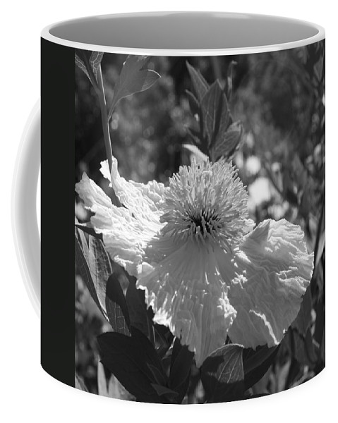 Coulters Matilija Poppies Coffee Mug featuring the photograph Coulter's Matilija Poppy 2 by Ellen Henneke
