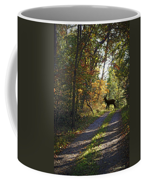 2d Coffee Mug featuring the photograph Country Lane by Brian Wallace