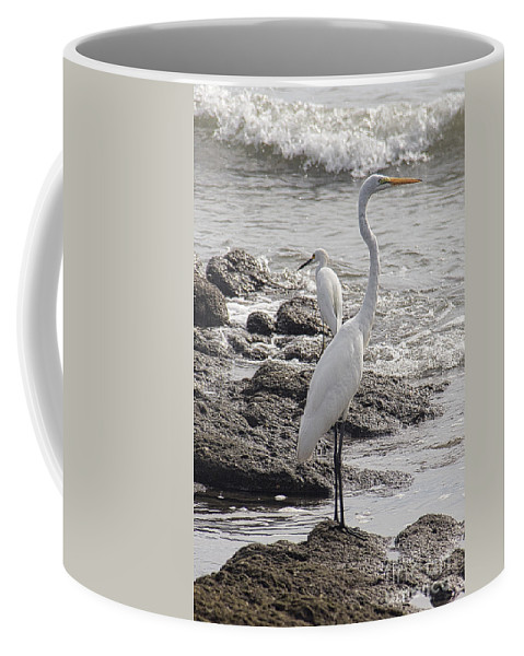 Birds Coffee Mug featuring the photograph Cousins by Bob Hislop