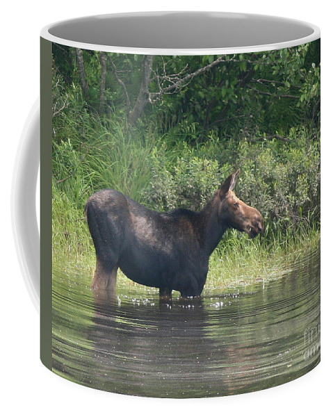 Moose Coffee Mug featuring the photograph Cow Moose Breakfast by Neal Eslinger