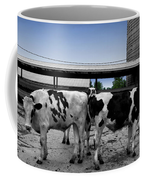 Animal Coffee Mug featuring the photograph Cows Peek A Boo by Thomas Woolworth