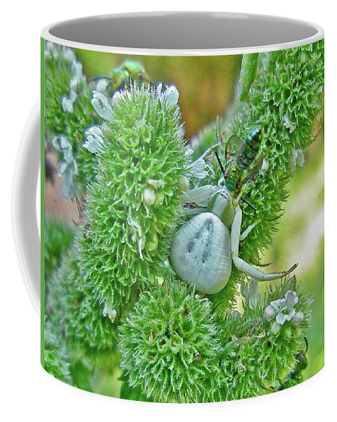 Spider Coffee Mug featuring the photograph Crab Spider - Thomisidae by Mother Nature