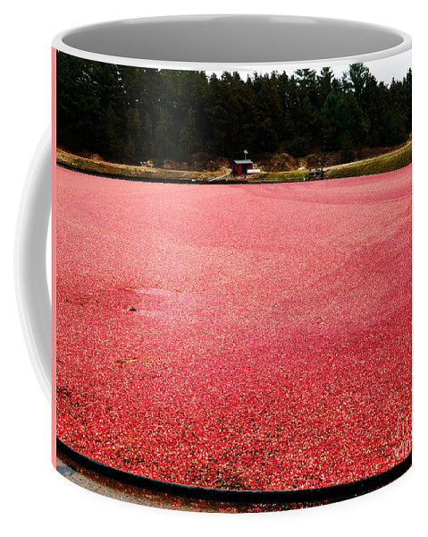 Cranberry Coffee Mug featuring the photograph Cranberry Harvest 4 by Andrea Anderegg