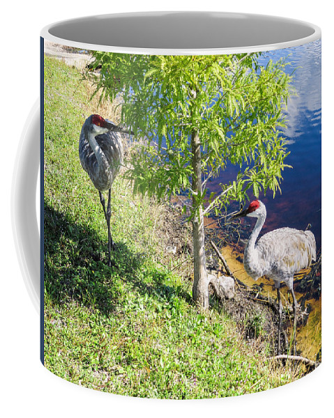 Sandhill Cranes Coffee Mug featuring the photograph Cranes by Zina Stromberg