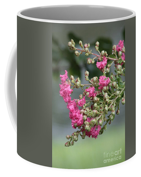 Raindrops Coffee Mug featuring the photograph Crepe Myrtle After The Rain by Carol Groenen