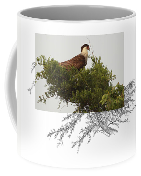 Crested Caracara Coffee Mug featuring the photograph Crested Caracara by Andrew McInnes