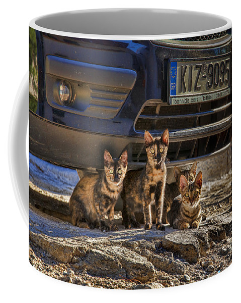 Auto Coffee Mug featuring the photograph Cretan Cats-1 by Casper Cammeraat