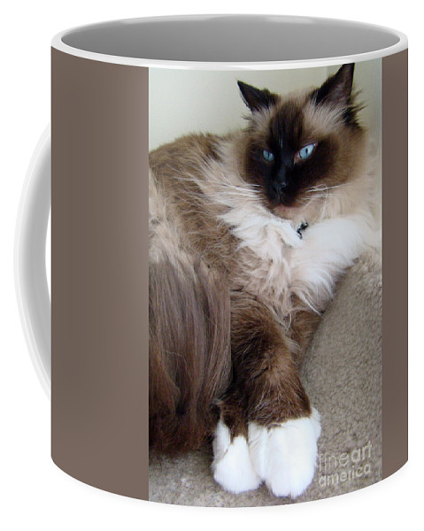 Cat Coffee Mug featuring the photograph Crossed Paws by Nancy L Marshall