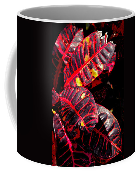 Croton Plant Coffee Mug featuring the photograph Croton Leaves In Black And Red by Michele Myers